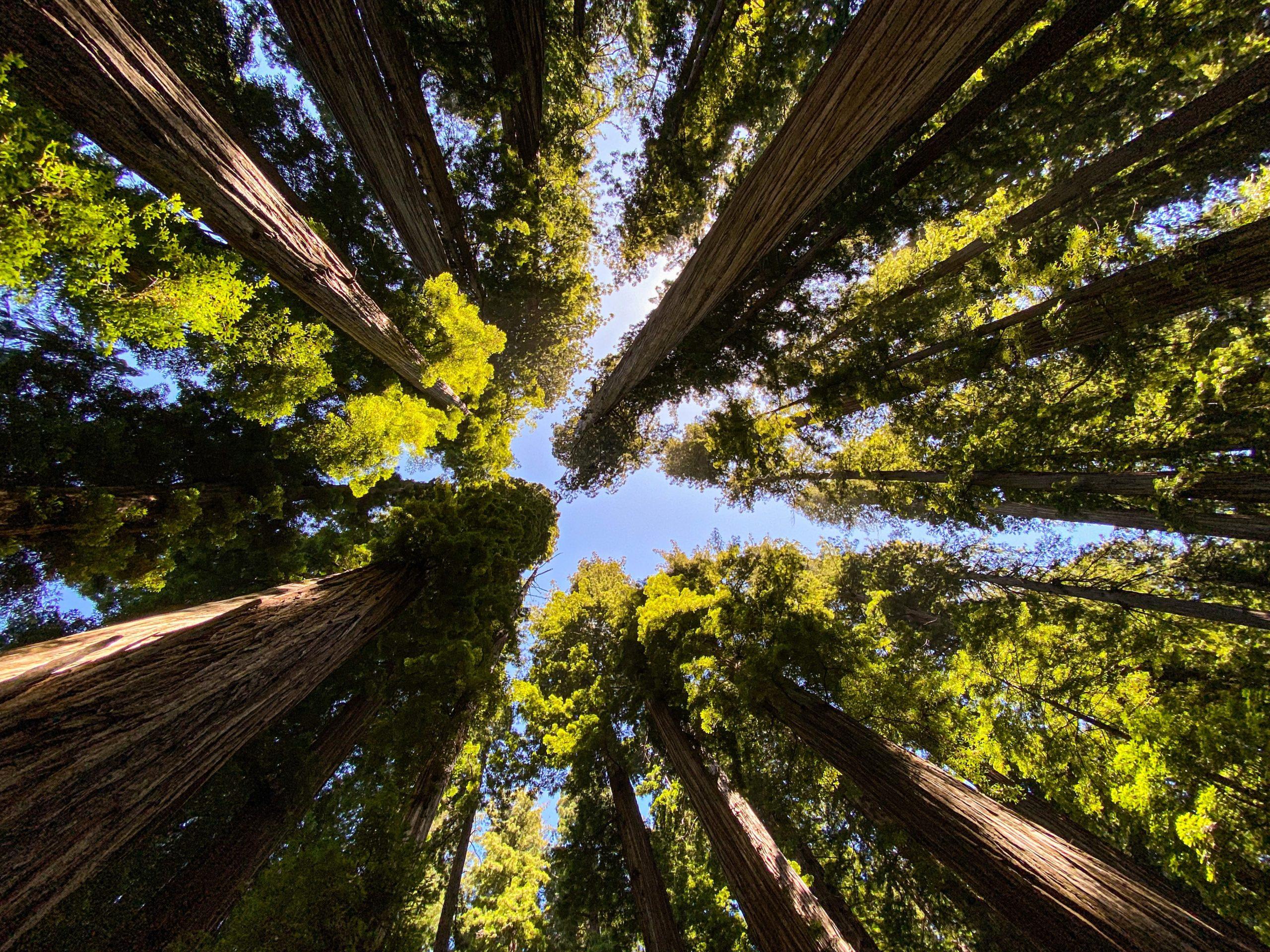 Cutting Forest